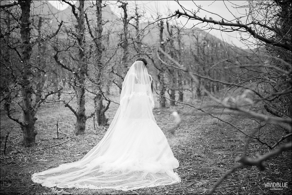 VividBlueKundleFemiWeddingLourensford093