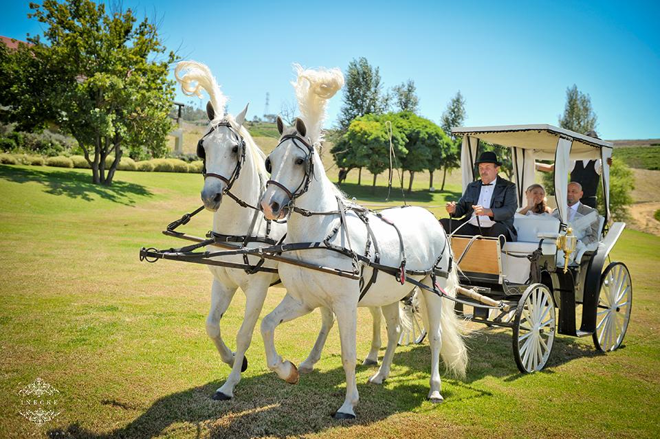 the-aleit-group-eduardo-lina-cavalli-wedding046