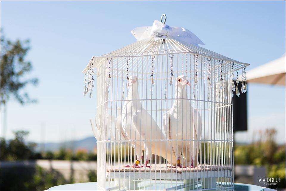 the-aleit-group-eduardo-lina-cavalli-wedding119