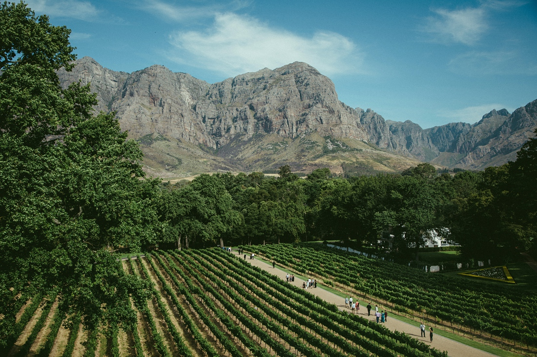 an image taken by Vividblue of molenvliet the mounters and vineyards.