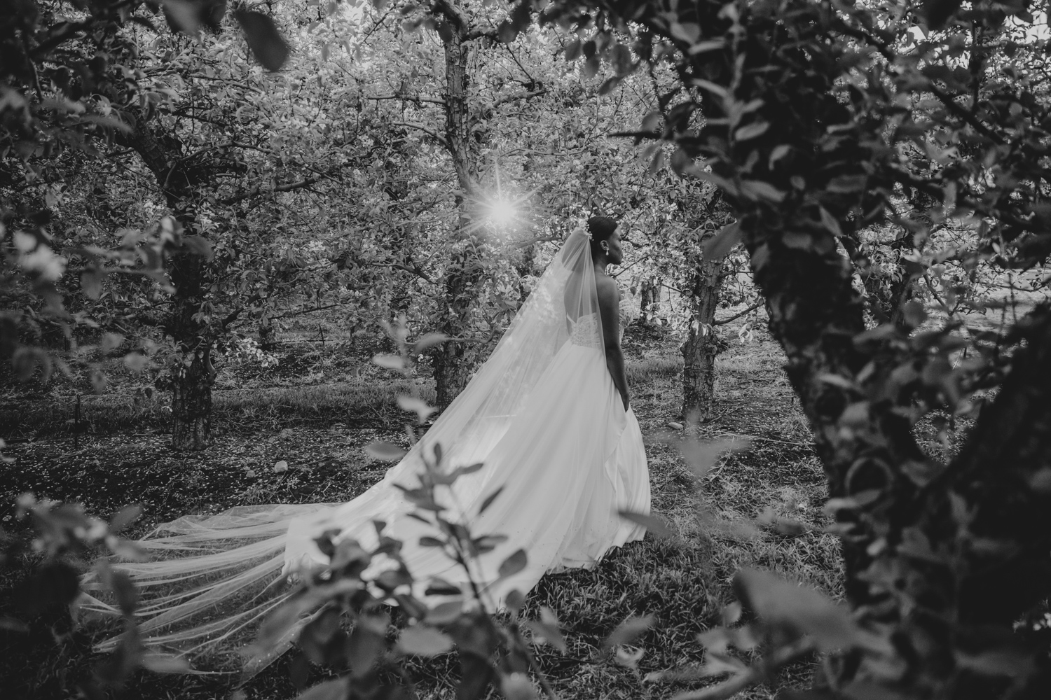 a bride walking on Lourensford wine estate with the sunlight shining on her and trough her dress.
