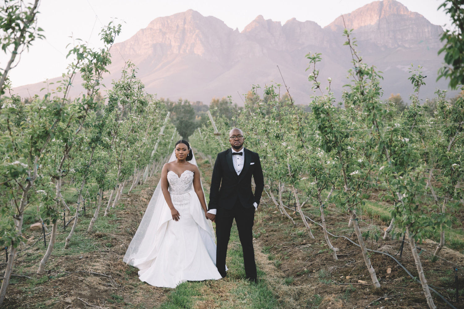 a bride and groom holding hands  in-between the vineyards on Lourensford wine estate.